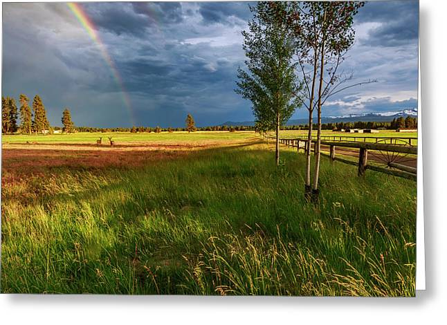 Greeting Card featuring the photograph Deer Under The Rainbow by Cat Connor