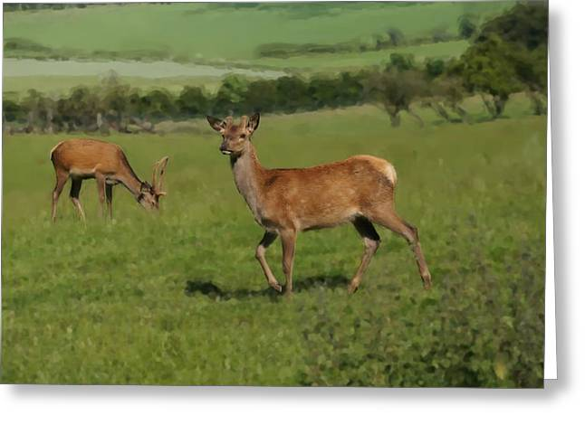 Deers On A Hill Pasture. Greeting Card