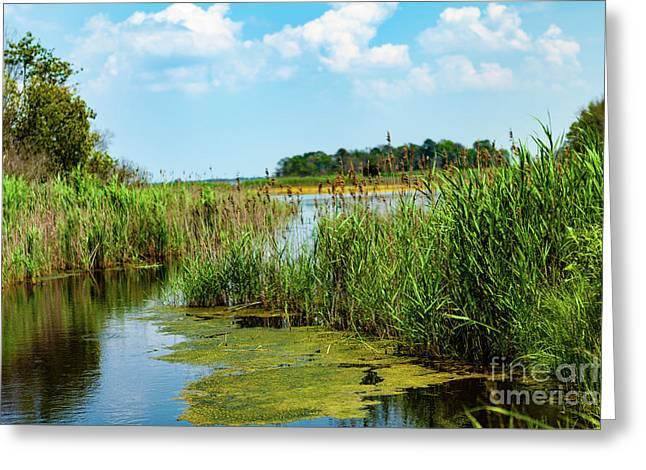 Delaware Marsh Greeting Card