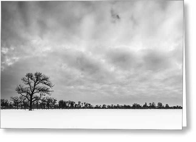 Delaware Park Winter  Meadow Greeting Card by Chris Bordeleau