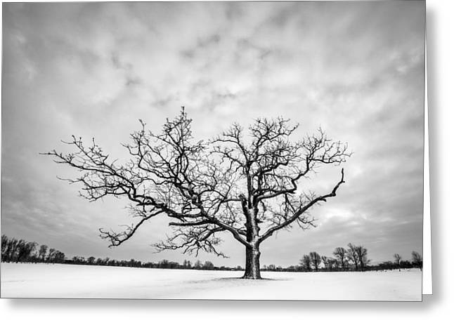 Greeting Card featuring the photograph Delaware Park Winter Oak by Chris Bordeleau