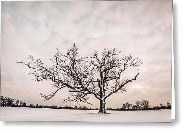 Greeting Card featuring the photograph Delaware Park Winter Oak - Color by Chris Bordeleau