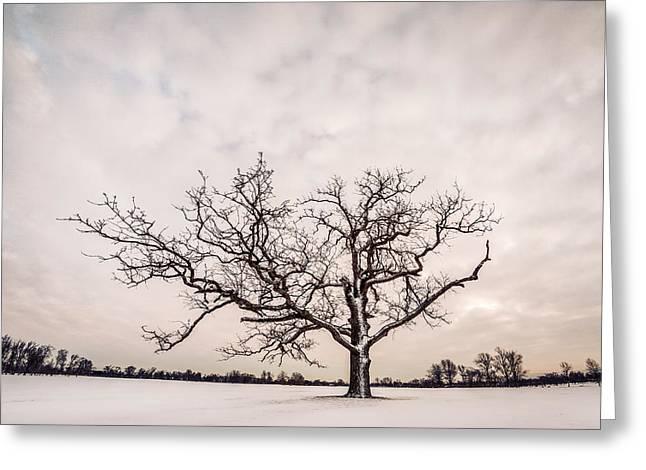 Delaware Park Winter Oak - Color Greeting Card by Chris Bordeleau