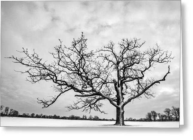 Greeting Card featuring the photograph Delaware Park Winter Oak - Square by Chris Bordeleau