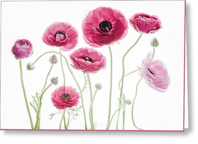 Delicate Arrangement Greeting Card by Rebecca Cozart