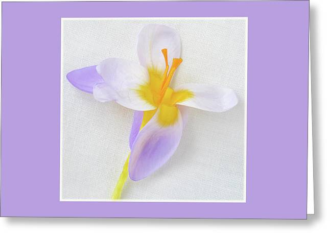 Greeting Card featuring the photograph Delicate Art Of Crocus by Terence Davis