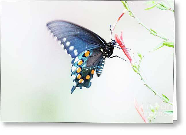 Delicate Azure Butterfly  Greeting Card