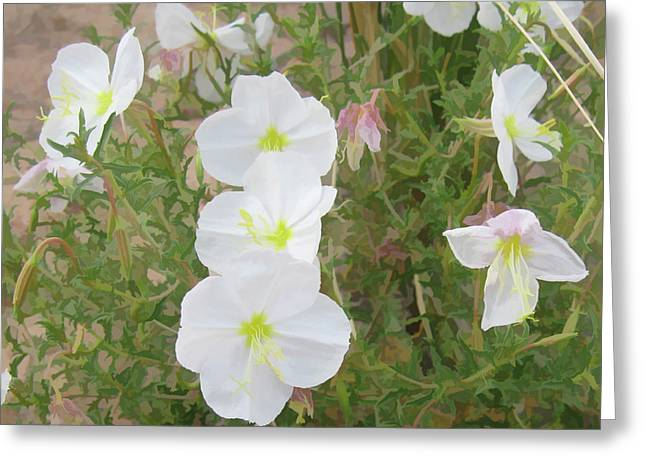 Delicate Desert Bloom - Death Valley Greeting Card