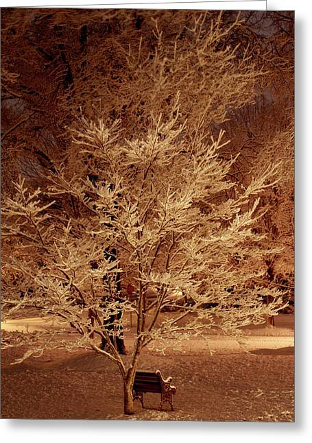 Delicate Dusting Greeting Card by Charles Shedd
