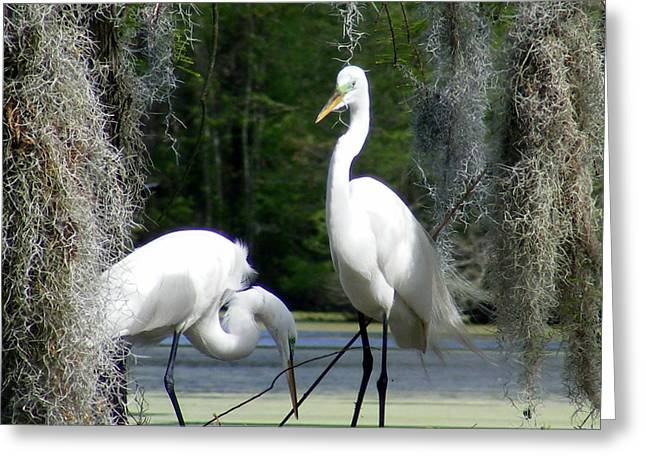 Delicate Egret Romance Greeting Card by Elena Tudor