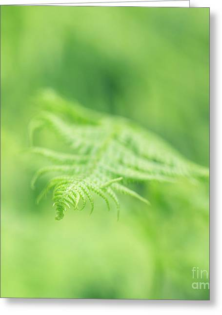 Delicate Fern - Hipster Photo Square Greeting Card