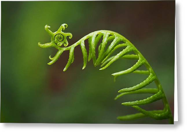 Delicate Fern Frond Spiral Greeting Card