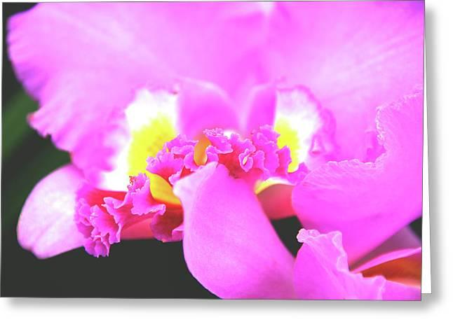 Tenderly Greeting Cards - Delicate in Pink Greeting Card by Susanne Van Hulst