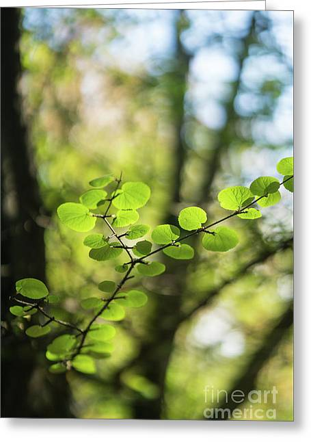 Delicate Leaves Forest Light Greeting Card by Mike Reid