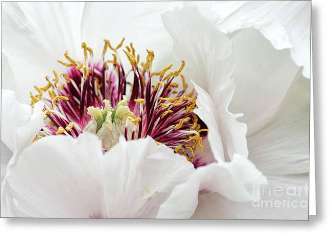 Delicate Peony Greeting Card by Tim Gainey