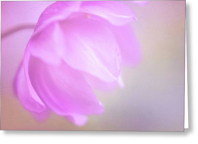 Delicate Pink Anemone Greeting Card