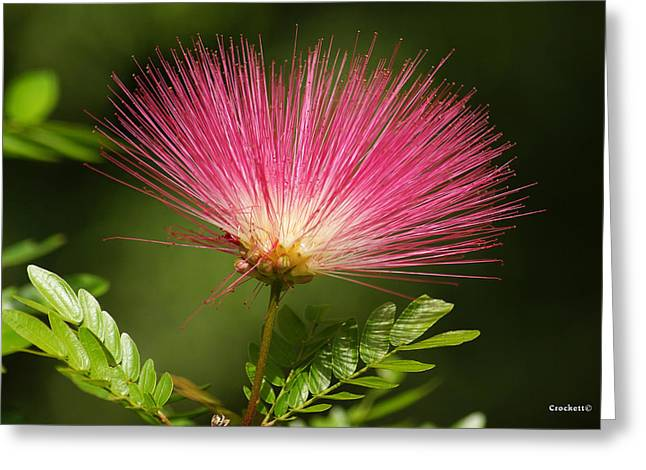 Delicate Pink Bloom Greeting Card by Gary Crockett