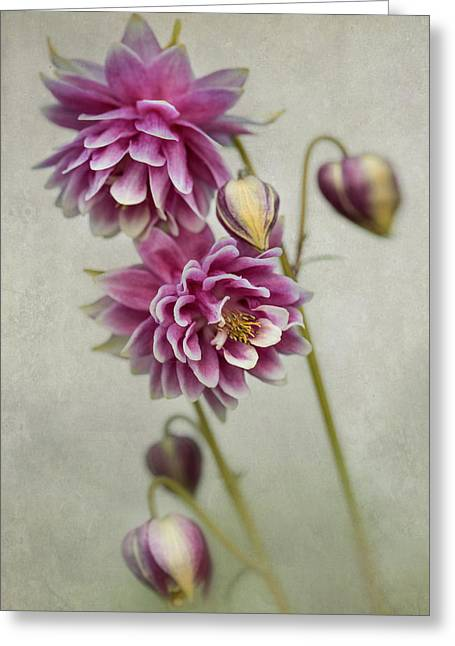 Delicate Pink Columbine Greeting Card