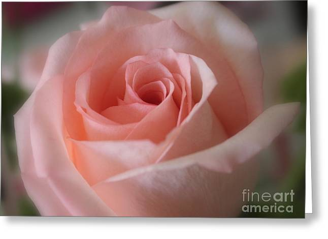 Floral Digital Photographs Greeting Cards - Delicate Pink Rose Greeting Card by Carol Groenen