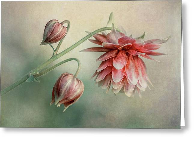Delicate Red Columbine Greeting Card
