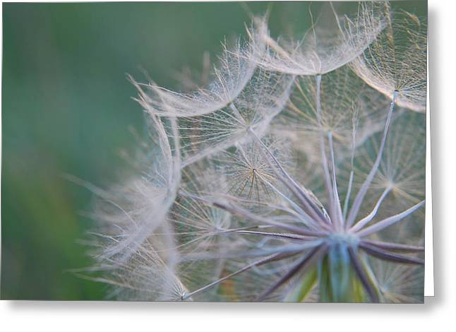 Greeting Card featuring the photograph Delicate Seeds by Amee Cave