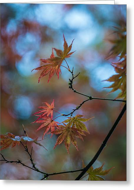 Delicate Signs Of Autumn Greeting Card by Mike Reid