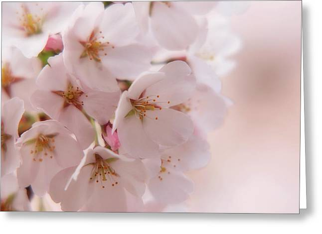 Delicate Spring Blooms Greeting Card