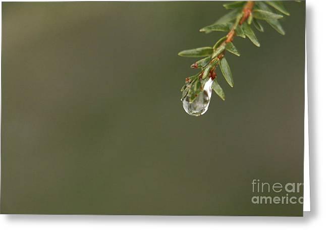 Delicate Water Drop Greeting Card by Elizabeth Dow