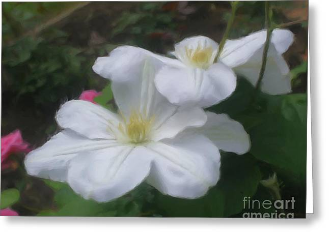 Delicate White Clematis Pair Greeting Card