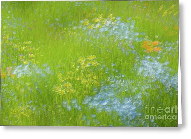 Greeting Card featuring the photograph Delicate Wildflowers by Brenda Tharp