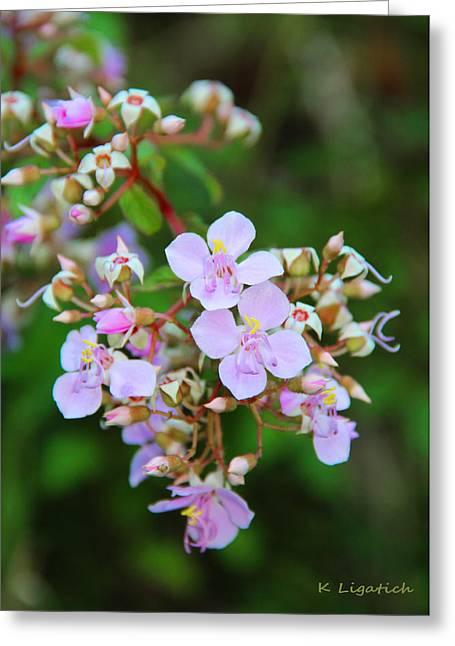 Kerri Ligatich Greeting Cards - Delicate wildflowers Greeting Card by Kerri Ligatich