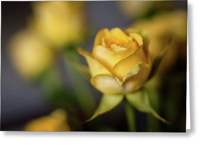 Greeting Card featuring the photograph Delicate Yellow Rose  by Terry DeLuco