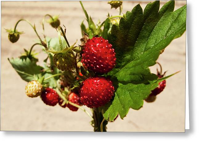 Delicious Wild Strawberry Greeting Card