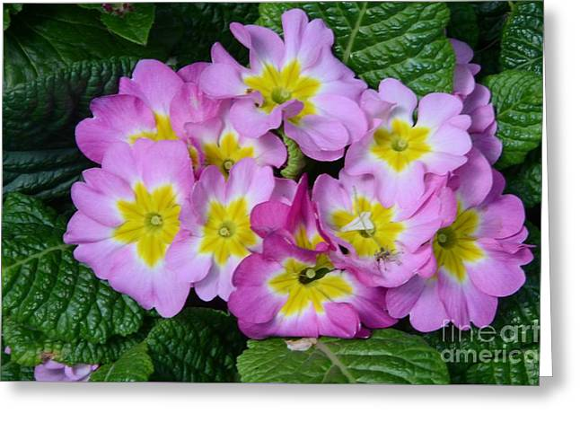 Delightful Spring Greeting Card by Kathleen Struckle