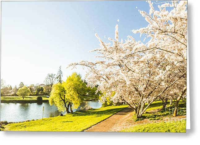 Deloraine Cherry Tree Panorama Greeting Card by Jorgo Photography - Wall Art Gallery