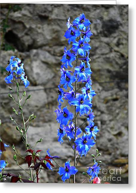Delphinium In The Rose Garden  Greeting Card
