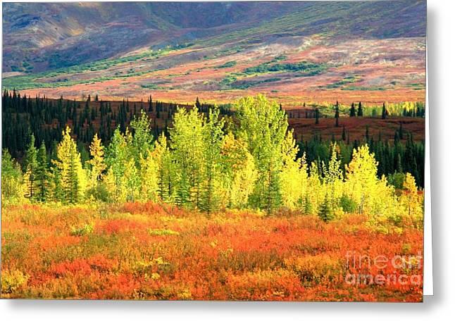 Denali Autumn Tundra Greeting Card