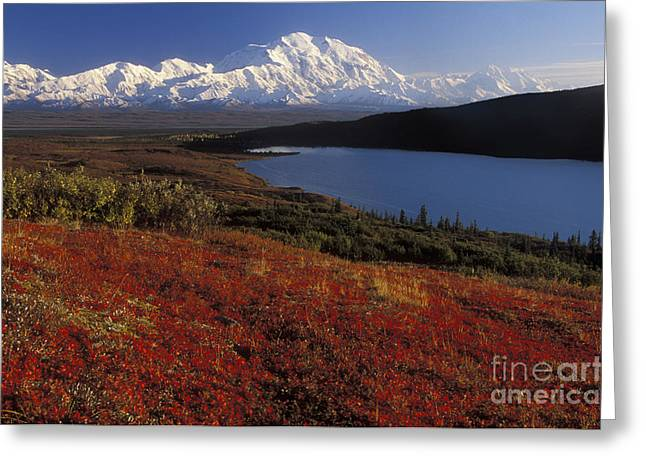 Denali Evening Greeting Card
