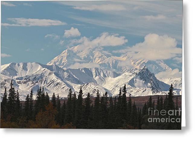 Denali In Broad Pass Greeting Card by Donna Quante