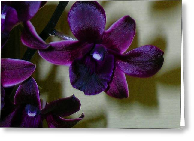 Dendrobium Nobile Orchid Greeting Card by James Temple