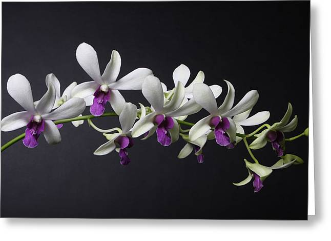 Dendrobium Orchid Greeting Card by Lynn Berreitter