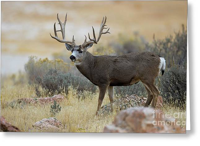 Desert Beast Greeting Card