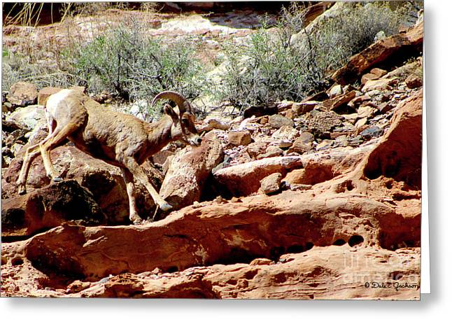 Desert Bighorn Ram Walking The Ledge Greeting Card