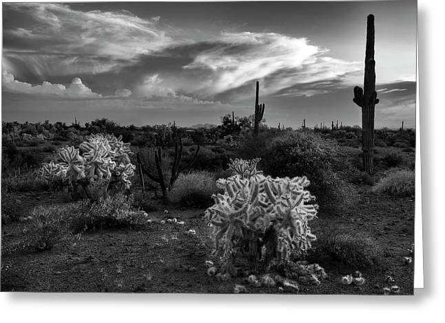 Greeting Card featuring the photograph Desert Cactus Black And White by Dave Dilli