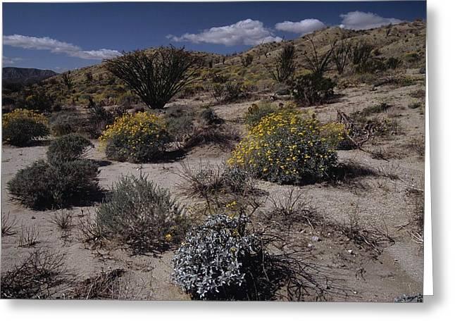 Desert Canyon Wildflower Bloom Greeting Card