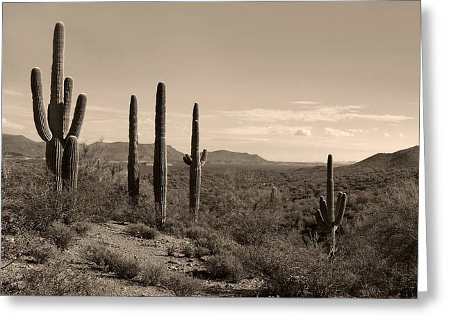 Desert Companions Greeting Card