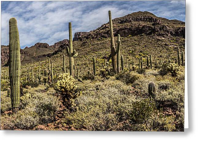 Desert Dreams Greeting Card by Chuck Brown