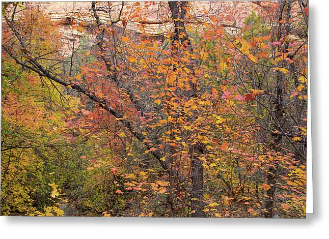 Desert Fall Colors Greeting Card by Kunal Mehra