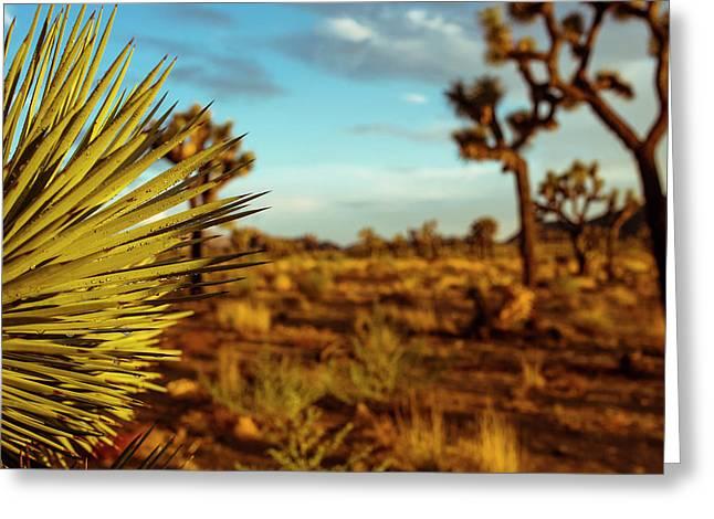 Desert Fan Greeting Card