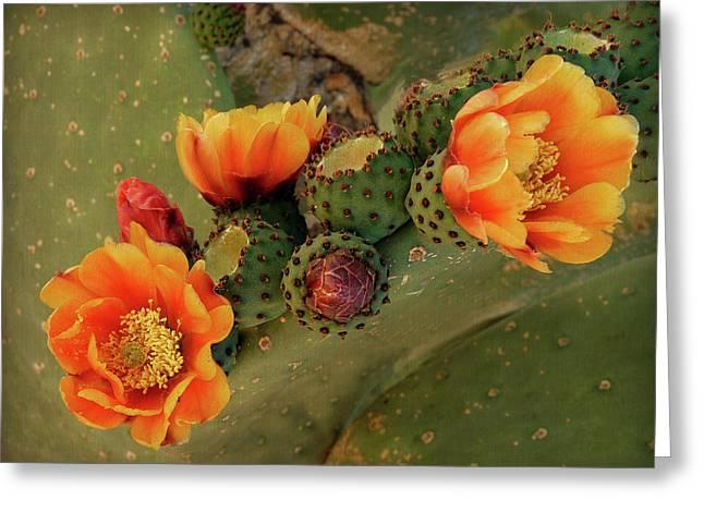Greeting Card featuring the photograph Desert Flame by Lucinda Walter